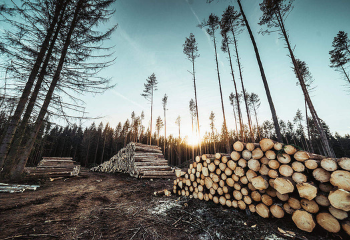 Volatile Lumber Supply Chain Causing Extreme Price Fluctuations